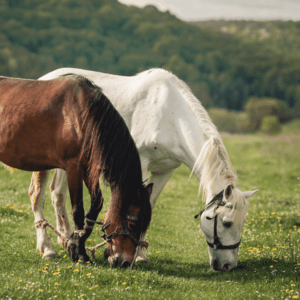01 que comen los caballos