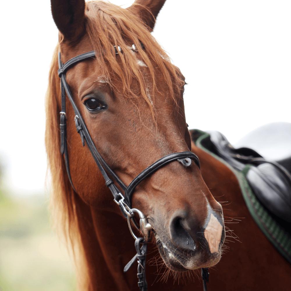 03 top 20 de las mejores razas de caballos