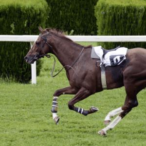 05 top 10 de caballos de carreras