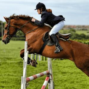 06 las 5 mejores razas de caballos