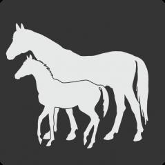 Portafolio para cada etapa Psicológica del caballo