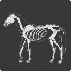 Fortalece el sistema Osteomuscular
